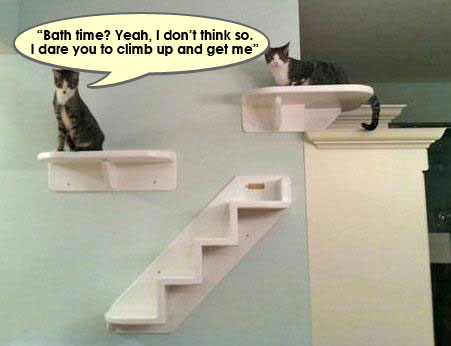 cat_shelves2