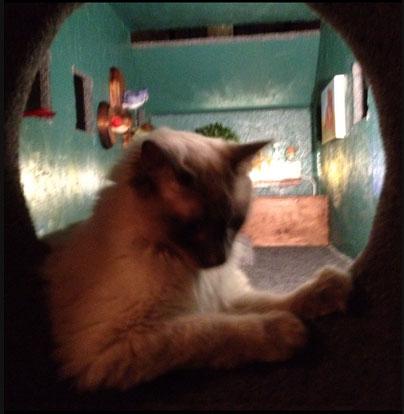 CAT-AT2