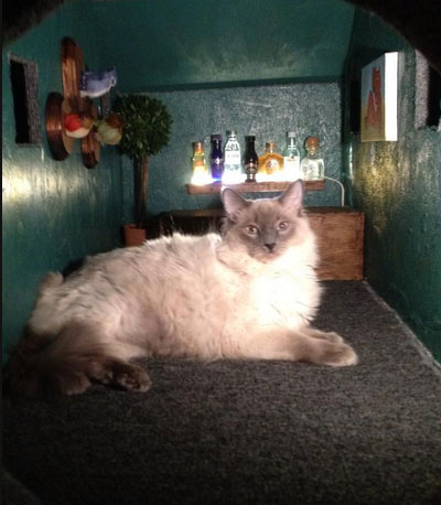 CAT-AT3