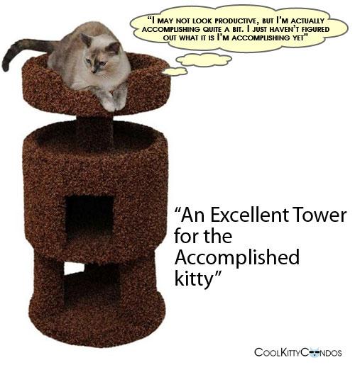 accomplished_kitty