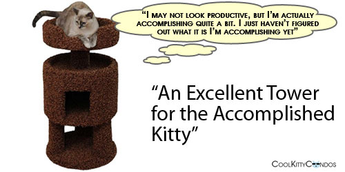 accomplished_kitty1