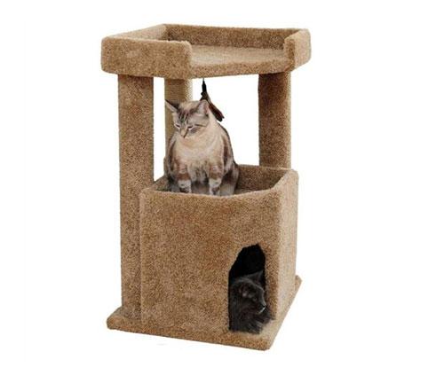 kitty_corner_condo2