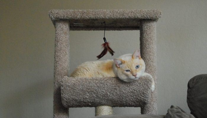 Macky loves sleeping up in his cat tree.
