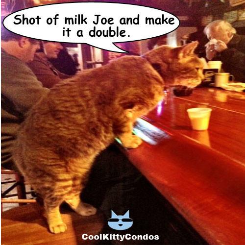 cat-in-bar