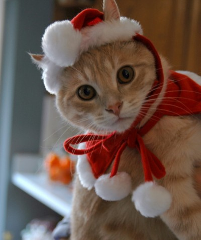 As ... & Holiday cat costumes are here! - CoolKittyCondos