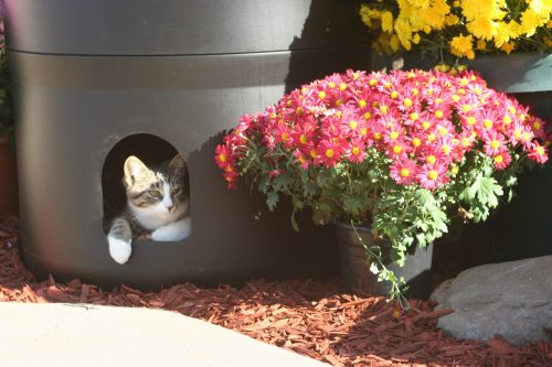 kitty_tube4