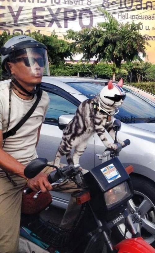 cool_cat
