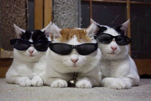 cool_cat_friends